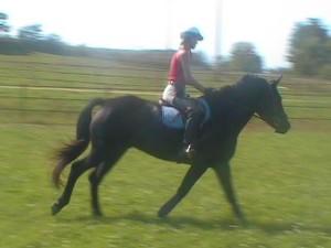 Zephyr and Diana schooling 2002 (2)
